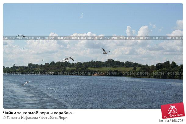 Чайки за кормой верны кораблю..., фото № 168798, снято 21 августа 2006 г. (c) Татьяна Нафикова / Фотобанк Лори