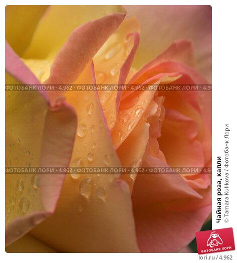 Чайная роза, капли, фото № 4962, снято 27 июня 2006 г. (c) Tamara Kulikova / Фотобанк Лори