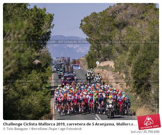 Challenge Ciclista Mallorca 2019, carretera de S Aranjassa, Mallorca... Редакционное фото, фотограф Tolo Balaguer / age Fotostock / Фотобанк Лори