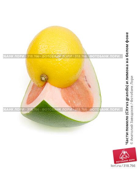 Части помело (Citrus grandis) и лимона на белом фоне, фото № 318766, снято 3 февраля 2007 г. (c) Анатолий Заводсков / Фотобанк Лори