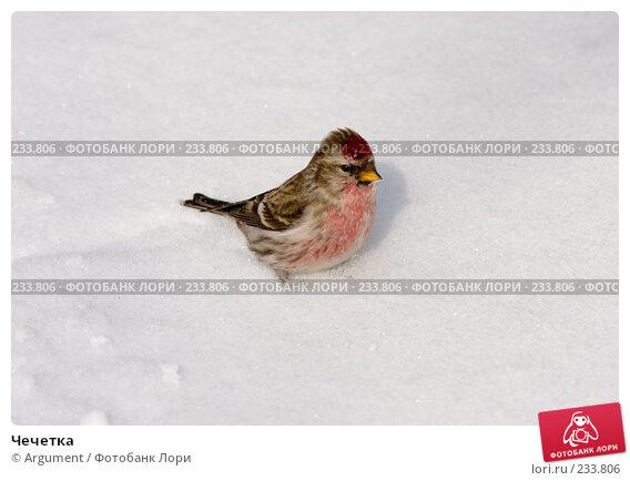Чечетка, фото № 233806, снято 24 марта 2008 г. (c) Argument / Фотобанк Лори