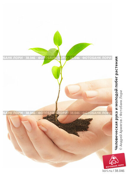 Человеческая рука и молодой побег растения, фото № 38046, снято 2 мая 2007 г. (c) Андрей Армягов / Фотобанк Лори