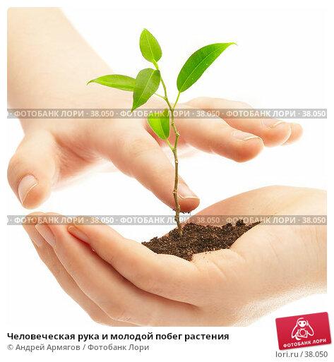 Человеческая рука и молодой побег растения, фото № 38050, снято 2 мая 2007 г. (c) Андрей Армягов / Фотобанк Лори