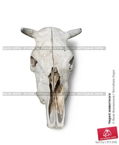 Купить «Череп животного», фото № 311010, снято 18 мая 2008 г. (c) Яков Филимонов / Фотобанк Лори