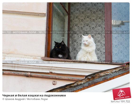 Черная и белая кошки на подоконнике, фото № 191722, снято 22 сентября 2007 г. (c) Шахов Андрей / Фотобанк Лори