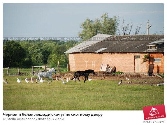 Черная и белая лошади скачут по скотному двору, фото № 52394, снято 12 июня 2007 г. (c) Елена Филиппова / Фотобанк Лори