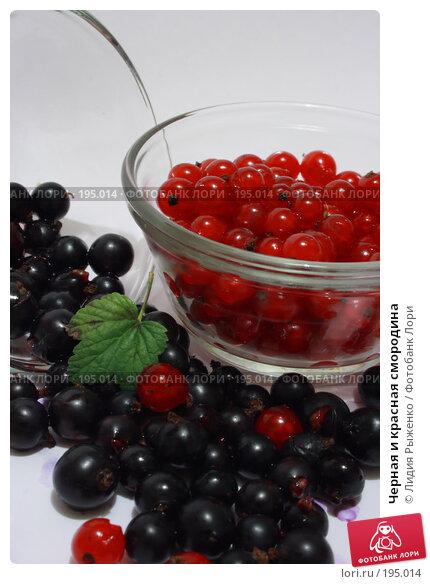 Черная и красная смородина, фото № 195014, снято 15 июля 2007 г. (c) Лидия Рыженко / Фотобанк Лори