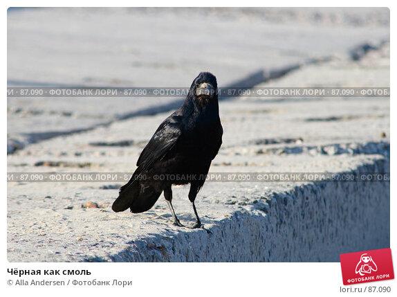 Купить «Чёрная как смоль», фото № 87090, снято 27 апреля 2007 г. (c) Alla Andersen / Фотобанк Лори