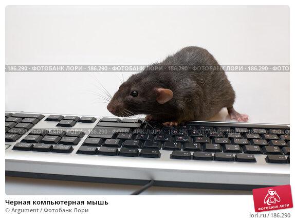 Черная компьютерная мышь, фото № 186290, снято 7 сентября 2007 г. (c) Argument / Фотобанк Лори