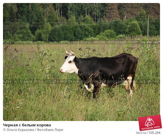 Черная с белым корова, фото № 105294, снято 23 февраля 2017 г. (c) Ольга Хорькова / Фотобанк Лори