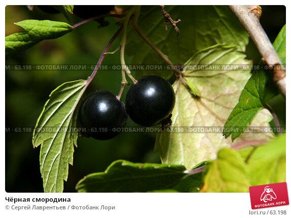 Чёрная смородина, фото № 63198, снято 12 июля 2007 г. (c) Сергей Лаврентьев / Фотобанк Лори