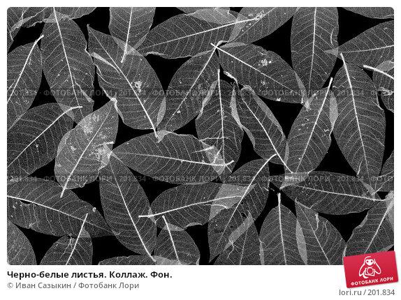 Черно-белые листья. Коллаж. Фон., фото № 201834, снято 14 февраля 2008 г. (c) Иван Сазыкин / Фотобанк Лори