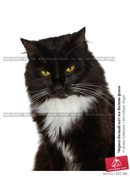 Купить «Черно-белый кот на белом фоне», фото № 332186, снято 14 марта 2008 г. (c) Aneta Vaitkiene / Фотобанк Лори
