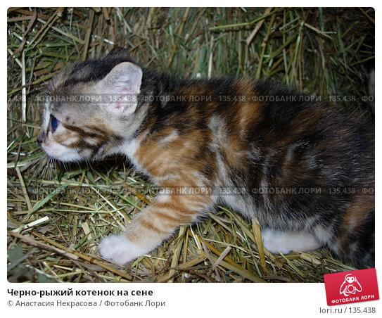 Черно-рыжий котенок на сене, фото № 135438, снято 3 сентября 2005 г. (c) Анастасия Некрасова / Фотобанк Лори