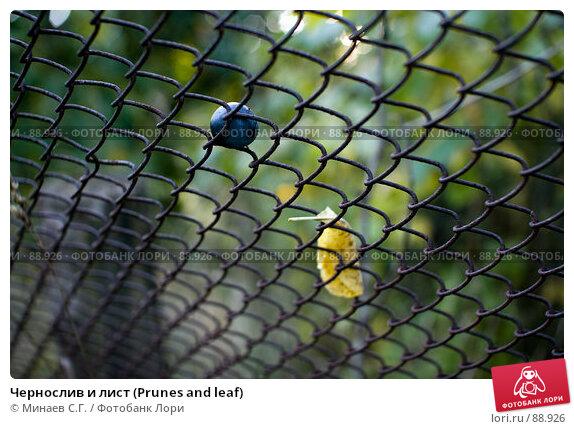 Чернослив и лист (Prunes and leaf), фото № 88926, снято 22 сентября 2007 г. (c) Минаев С.Г. / Фотобанк Лори