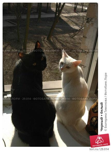 Черный + белый, фото № 29014, снято 29 марта 2007 г. (c) Екатерина Тимонова / Фотобанк Лори