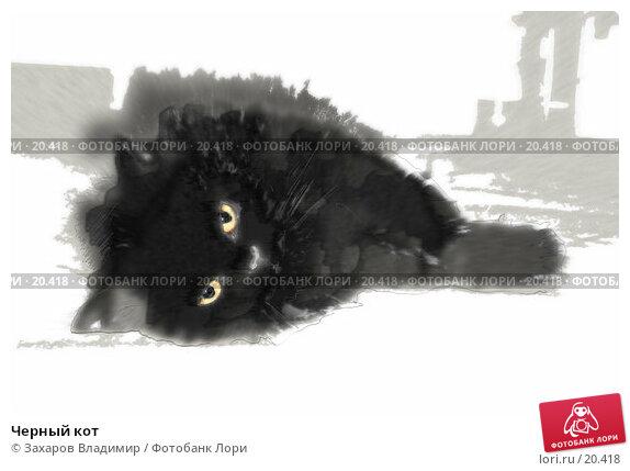 Черный кот, фото № 20418, снято 25 мая 2017 г. (c) Захаров Владимир / Фотобанк Лори