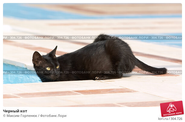 Черный кот, фото № 304726, снято 23 мая 2007 г. (c) Максим Горпенюк / Фотобанк Лори