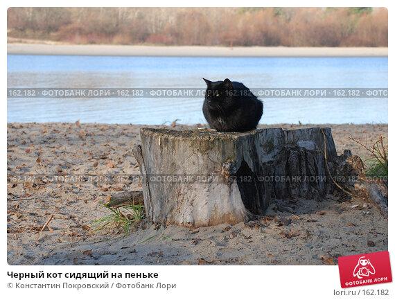 Черный кот сидящий на пеньке, фото № 162182, снято 18 ноября 2006 г. (c) Константин Покровский / Фотобанк Лори