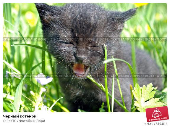 Черный котёнок, фото № 319014, снято 9 июня 2008 г. (c) RedTC / Фотобанк Лори