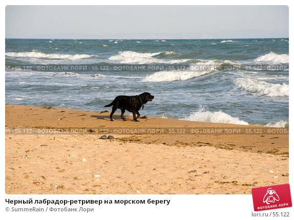 Черный лабрадор-ретривер на морском берегу, фото № 55122, снято 26 февраля 2017 г. (c) SummeRain / Фотобанк Лори