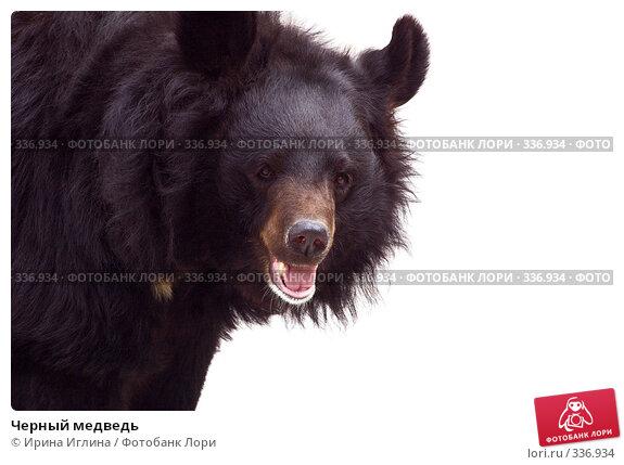Черный медведь, фото № 336934, снято 21 июня 2008 г. (c) Ирина Иглина / Фотобанк Лори
