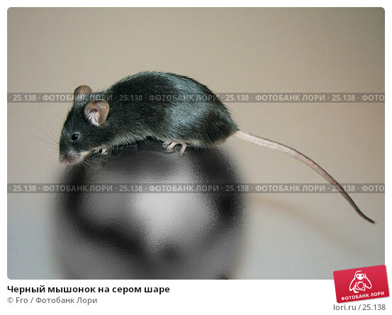 Купить «Черный мышонок на сером шаре», фото № 25138, снято 27 апреля 2018 г. (c) Fro / Фотобанк Лори