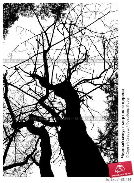 Черный силуэт мертвого дерева, фото № 163486, снято 26 октября 2007 г. (c) Сергей Старуш / Фотобанк Лори