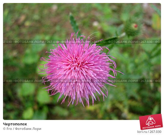 Чертополох, фото № 267030, снято 25 сентября 2005 г. (c) Fro / Фотобанк Лори