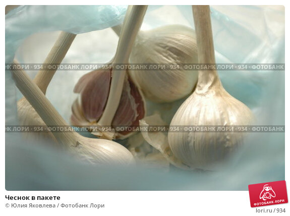 Купить «Чеснок в пакете», фото № 934, снято 21 февраля 2006 г. (c) Юлия Яковлева / Фотобанк Лори