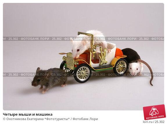 Четыре мыши и машина, эксклюзивное фото № 25302, снято 18 марта 2007 г. (c) Охотникова Екатерина *Фототуристы* / Фотобанк Лори