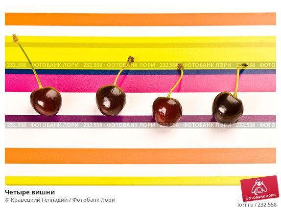 Купить «Четыре вишни», фото № 232558, снято 13 июля 2005 г. (c) Кравецкий Геннадий / Фотобанк Лори