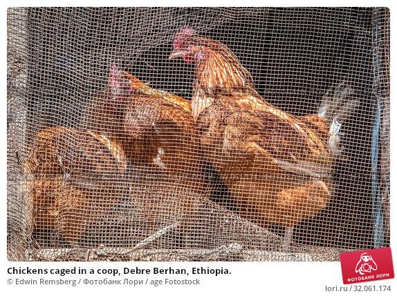 Chickens caged in a coop, Debre Berhan, Ethiopia. Стоковое фото, фотограф Edwin Remsberg / age Fotostock / Фотобанк Лори