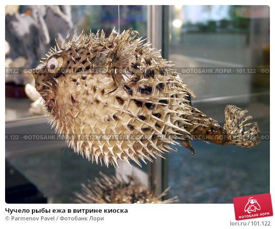 Чучело рыбы ежа в витрине киоска, фото № 101122, снято 20 ноября 2004 г. (c) Parmenov Pavel / Фотобанк Лори