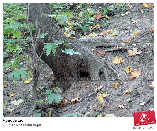Чудовище, фото № 12250, снято 28 сентября 2006 г. (c) Roki / Фотобанк Лори