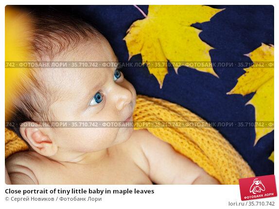 Close portrait of tiny little baby in maple leaves. Стоковое фото, фотограф Сергей Новиков / Фотобанк Лори