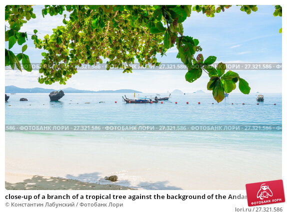 Купить «close-up of a branch of a tropical tree against the background of the Andaman Sea on the island», фото № 27321586, снято 10 ноября 2016 г. (c) Константин Лабунский / Фотобанк Лори