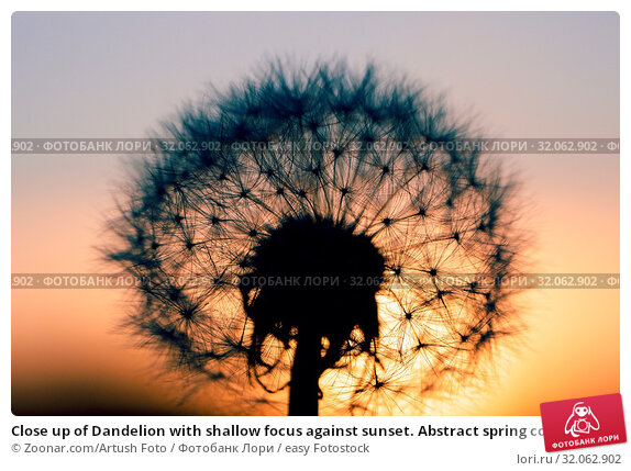 Close up of Dandelion with shallow focus against sunset. Abstract spring color tone background. Стоковое фото, фотограф Zoonar.com/Artush Foto / easy Fotostock / Фотобанк Лори
