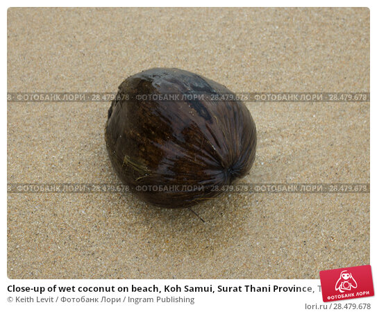 Купить «Close-up of wet coconut on beach, Koh Samui, Surat Thani Province, Thailand», фото № 28479678, снято 19 марта 2019 г. (c) Ingram Publishing / Фотобанк Лори