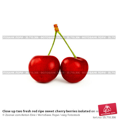 Close up two fresh red ripe sweet cherry berries isolated on white... Стоковое фото, фотограф Zoonar.com/Anton Eine / easy Fotostock / Фотобанк Лори