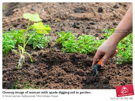 Closeup image of woman with spade digging soil in garden. Стоковое фото, фотограф Константин Лабунский / Фотобанк Лори
