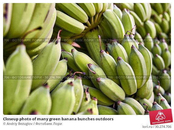 Купить «Closeup photo of many green banana bunches outdoors», фото № 30274706, снято 15 февраля 2019 г. (c) Andriy Bezuglov / Фотобанк Лори