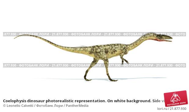 Купить «Coelophysis dinosaur photorealistic representation. On white background. Side view.», иллюстрация № 21877930 (c) PantherMedia / Фотобанк Лори