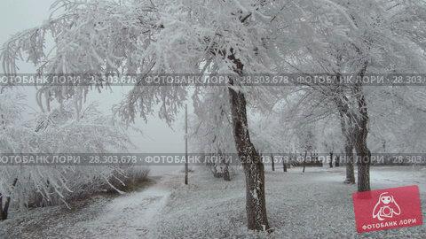 Купить «Covered with a hoarfrost mountain glade. Windy and foggy weather.», видеоролик № 28303678, снято 24 марта 2018 г. (c) Андрей Радченко / Фотобанк Лори