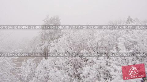Купить «Covered with a hoarfrost mountain glade. Windy and foggy weather.», видеоролик № 28403494, снято 27 марта 2018 г. (c) Андрей Радченко / Фотобанк Лори