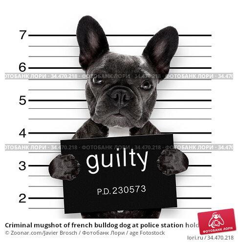 Criminal mugshot of french bulldog dog at police station holding ... Стоковое фото, фотограф Zoonar.com/Javier Brosch / age Fotostock / Фотобанк Лори
