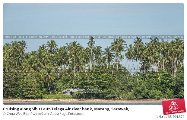 Cruising along Sibu Laut-Telaga Air river bank, Matang, Sarawak, ... Стоковое фото, фотограф Chua Wee Boo / age Fotostock / Фотобанк Лори