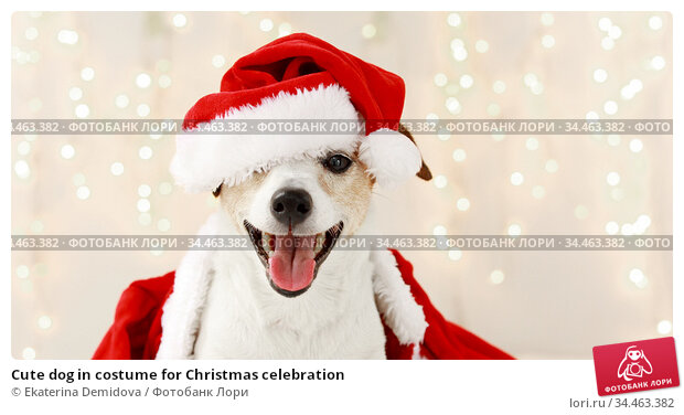 Cute dog in costume for Christmas celebration. Стоковое фото, фотограф Ekaterina Demidova / Фотобанк Лори