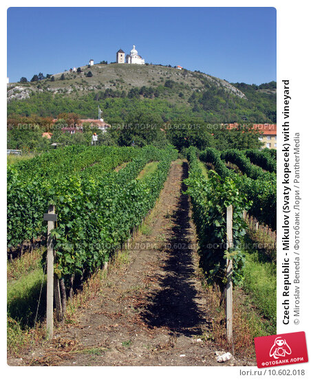Czech Republic - Mikulov (Svaty kopecek) with vineyard. Стоковое фото, фотограф Miroslav Beneda / PantherMedia / Фотобанк Лори