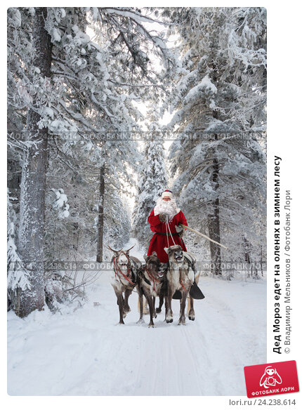 Купить «Дед Мороз едет на оленях в зимнем лесу», фото № 24238614, снято 5 декабря 2010 г. (c) Владимир Мельников / Фотобанк Лори